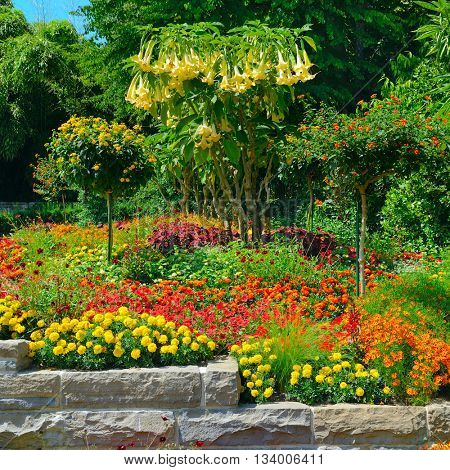 Colorful blooming flower bed at summer park