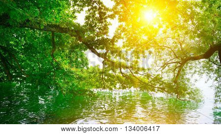 Bright sunrise on shore of picturesque lake