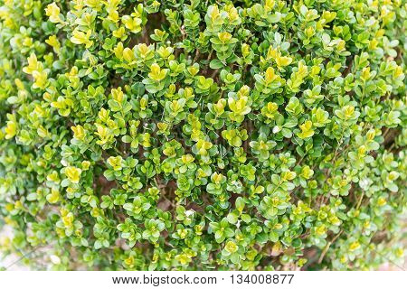 Green Plants Inside A Greenhouse
