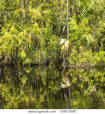 Undergrowth And Roots Of Mangrove Trees In The Everglades National Park