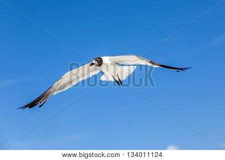 Seagull On Blue Sky Background