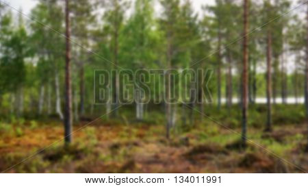 Green finnish taiga in summer intentionally blurred
