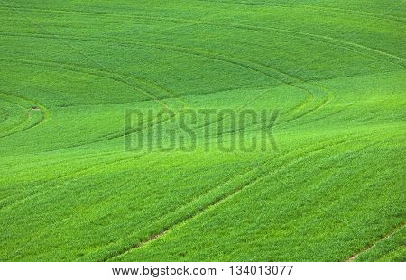 marks in the green field from tractor driving