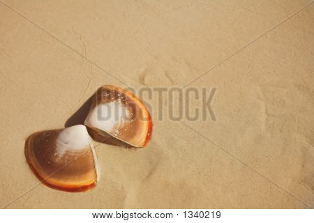 Butterfly Shells On The Beach In The Wet Sand