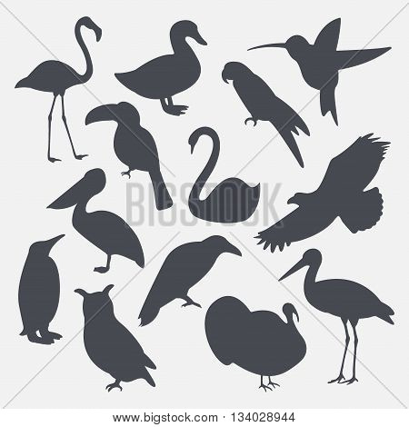Vector set of silhouettes of birds isolated on white background