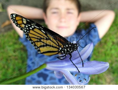 Boy looking up at monarch butterfly while laying down on grass with hands behind head.