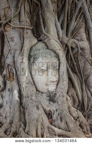Stone head of buddha in root tree of Wat Mahathat in Ayutthaya Thailand