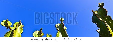 detail of cactus with clear blue sky