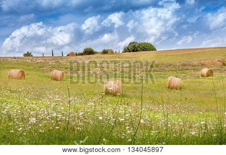 Rural landscapes of Tuscany Italy. Bales and haystacks on the hills and fields. Meadow flowers