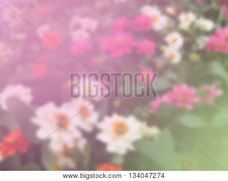 sweet dreamy and de-focused colorful of flowers in garden