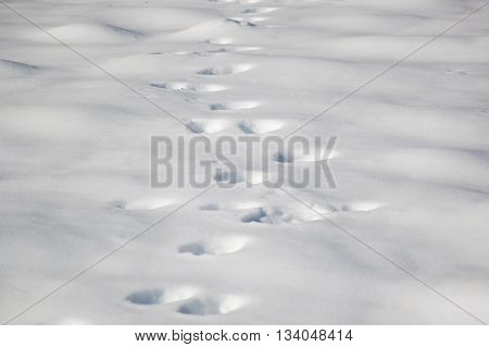 Background with bear footprints on fresh snow surface