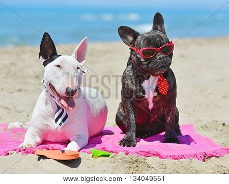 two dogs lying down in the beach