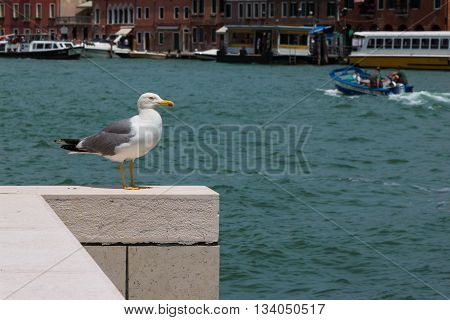 Static Alone Seagull on White Parapet Sea in Background