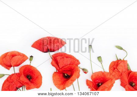 Heads of red weeds on the bottom of white background flat lay
