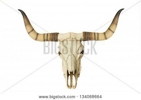 big Goat Skull isolated on white background