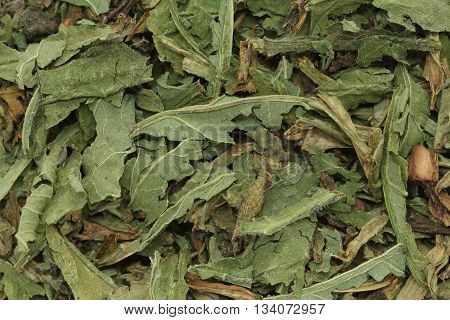 Organic dry green True comfrey (Symphytum officinale) leaves. Macro close up background texture. Top view.