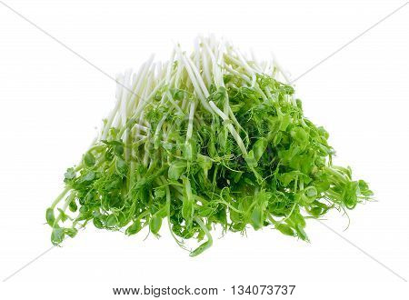 green pea sprouts on a white background