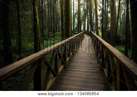 A wood path in Alishan National Scenic Area Cypress trail Chiayi Province Taiwan