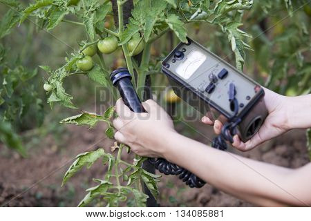 Measuring radiation levels of tomato in the garden