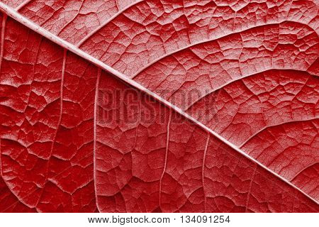 abstract natural texture of a surface of a leaf of a plant with streaks closeup for a natural background or for wallpaper of red color