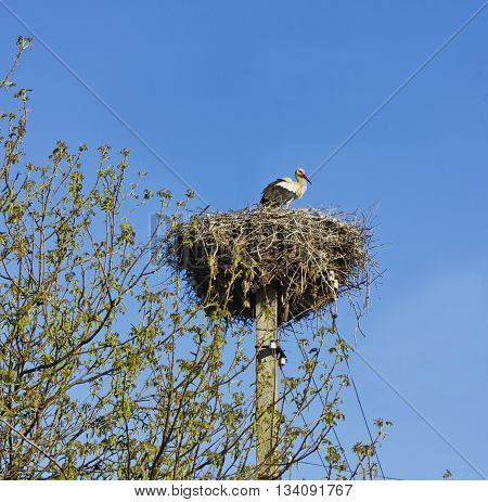 Image of a stork in its nest with blue sky
