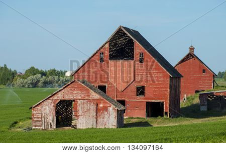 Classic iconic large red barn on green pasture farm agriculture