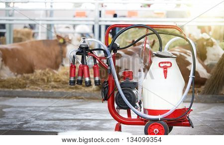 Milking Machine In Front Of Cows