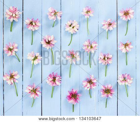 Meadow Pink Flowers On Blue Wooden Background.