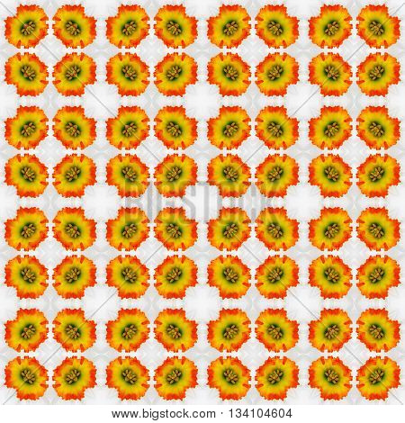 abstract decorative pattern of orange flowers on the Narcissus with a kaleidoscope effect. for greetings or wrapping paper