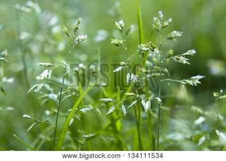 весенние травинки на лесной поляне в тени