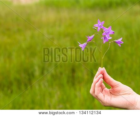 hand of a girl with a flower bell in field