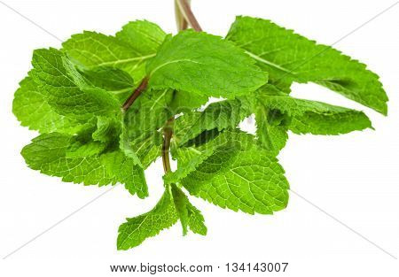 Leaves Of Mint (peppermint) Isolated On White