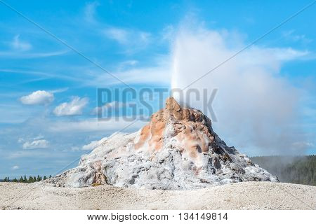 The White Dome Geyser erupting in Yellowstone National Park