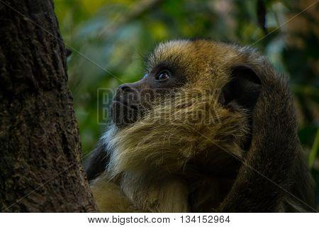 Foto de simio tomada en parque temaiken