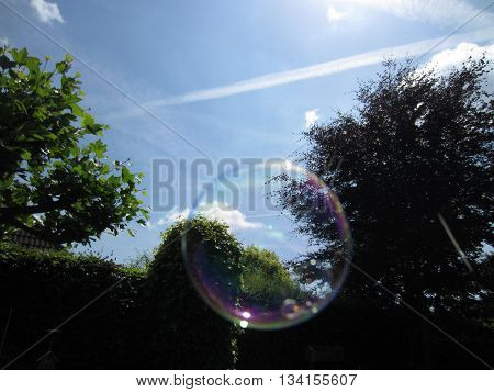 Floating soap bubble in front of trees and a blue sky