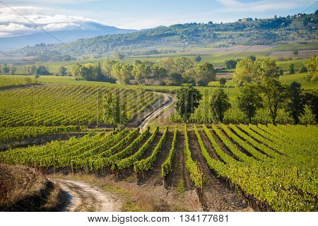 Beautiful Autumn Tuscany Vineyards View