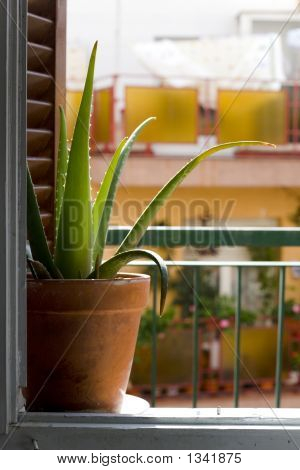 Window And Cactus