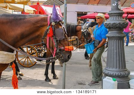 Pisa Italy - June 29 2015: Man feed the horse on Piazza del Duomo. Province Pisa Tuscany region of Italy