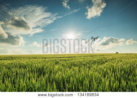 Flying drone above the green wheat field