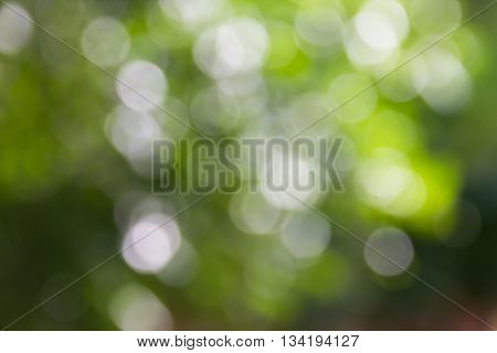 Fresh summer colour green tone soft bokeh tree bush abstract background