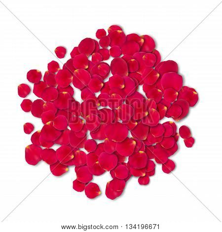 Vector bright roses petals lie. A lot of pink petals on white background. Nature view from above.