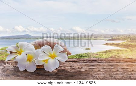 Whitfocused At White Yellow Flowers Plumeria Or Frangipani Bunch In Sea Conch Shell, Flowers On Wood