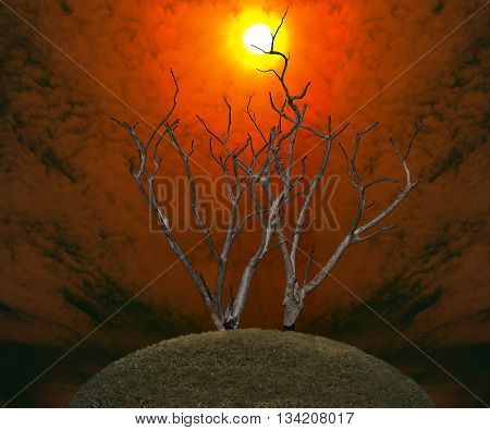 Dark And Burned Of Dead Tree On Twilight Sky With Sunset Background .