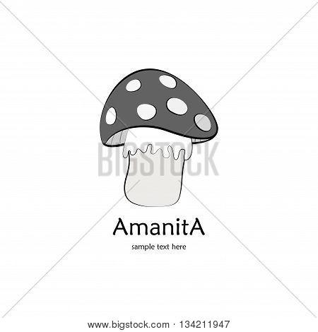 Gray amanita isolateb on white background with text