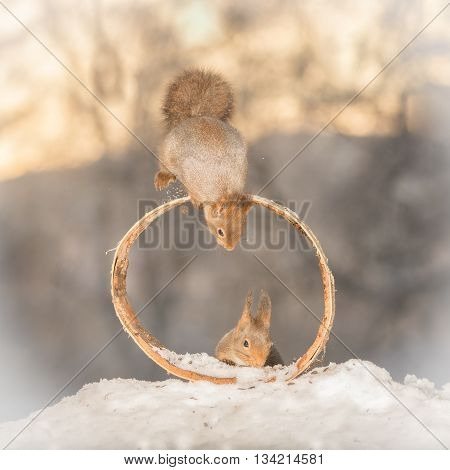 red squirrel on a circle with squirrel beneath