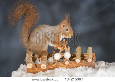 red squirrel standing on a xylophone in snow