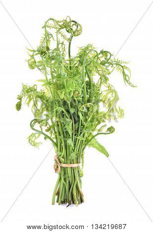fern shoot isolated on white background .