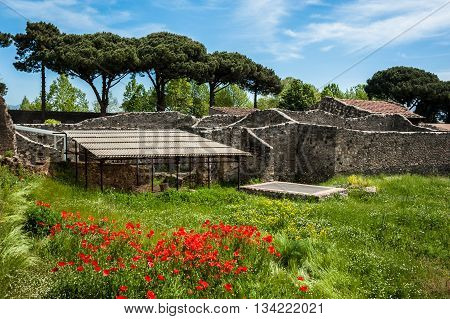 View of the ruins of Ancient Roman city Pompeii, Italy. The ruins overgrown with grass and flowers. Pompeii was destroyed and buried with ash after Vesuvius eruption in 79 AD.
