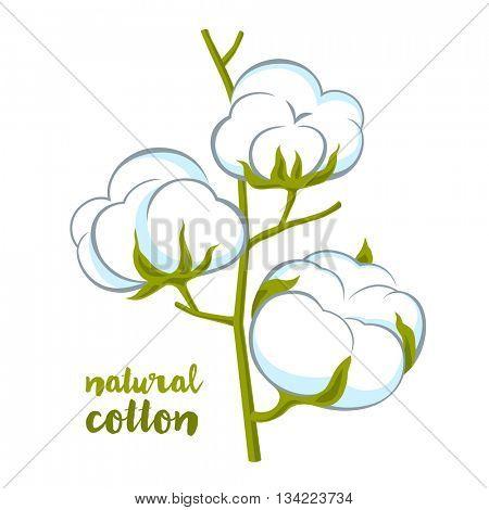 cotton brunch on white background