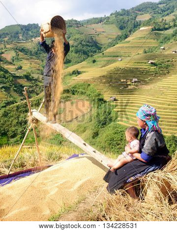 YEN BAI, Vietnam, August 21, 2016 Hmong families, Mu Cang Chai high mountains, Yen Bai province, harvesting rice on terraced fields